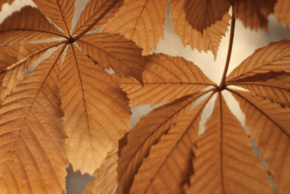 Chestnut Leaves Duet I Brown Geyman, Vitaly 3806