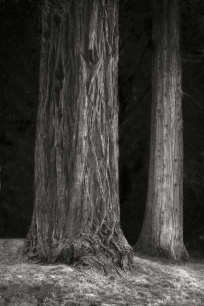 Ancient Forest II BandW Geyman, Vitaly 3855