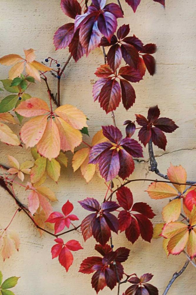 Vine Leaf Romance I Vitaly, Geyman 9936