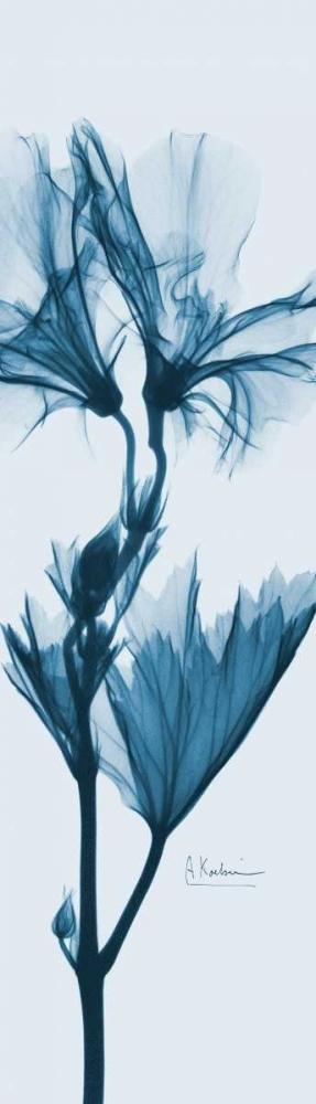 Geranium in Blue Koetsier, Albert 22111
