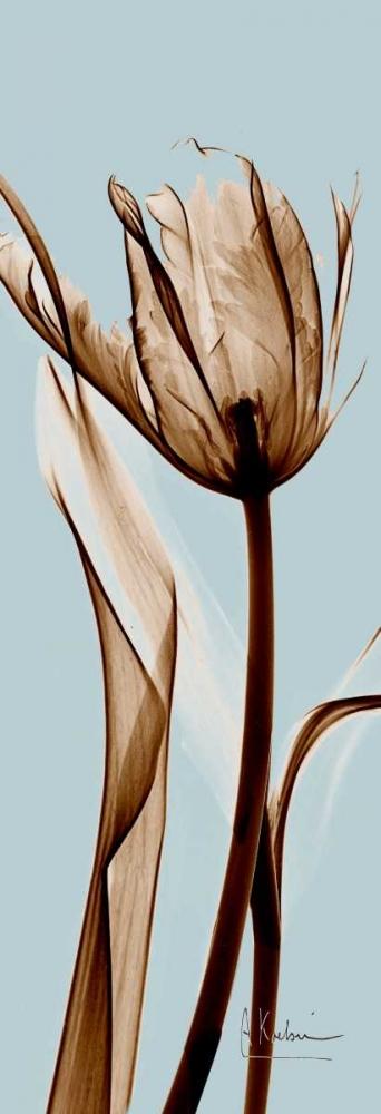 Tulip Brown on Blue Koetsier, Albert 22137