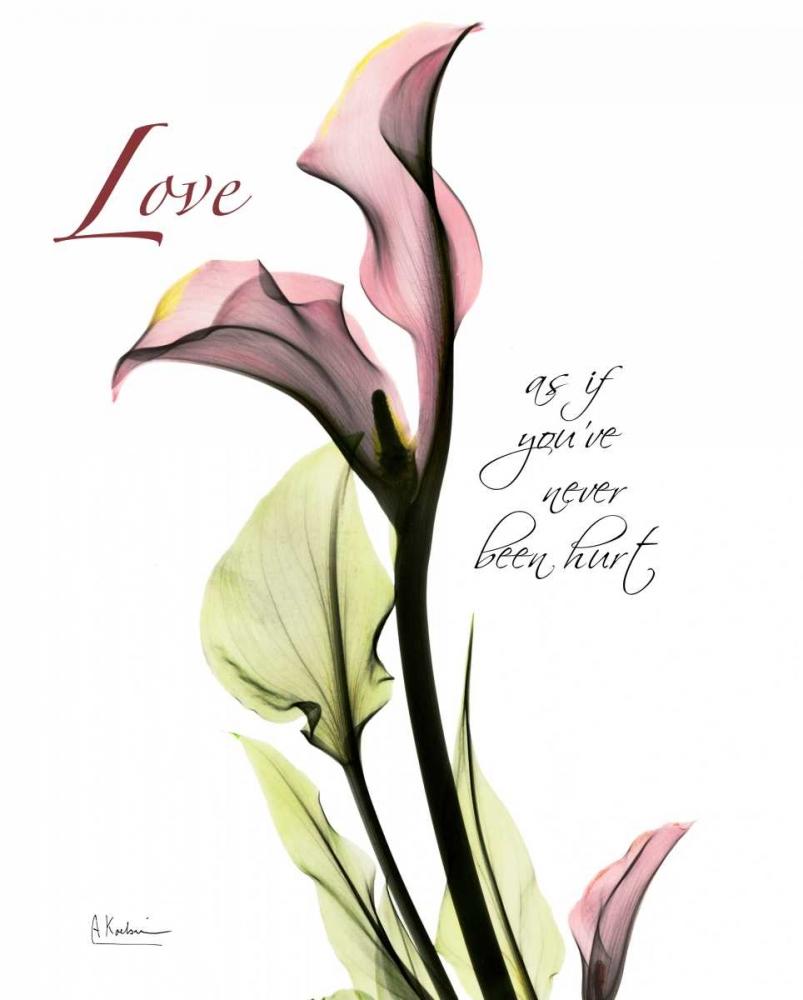 Calla Lily in Pink - Love Koetsier, Albert 22166