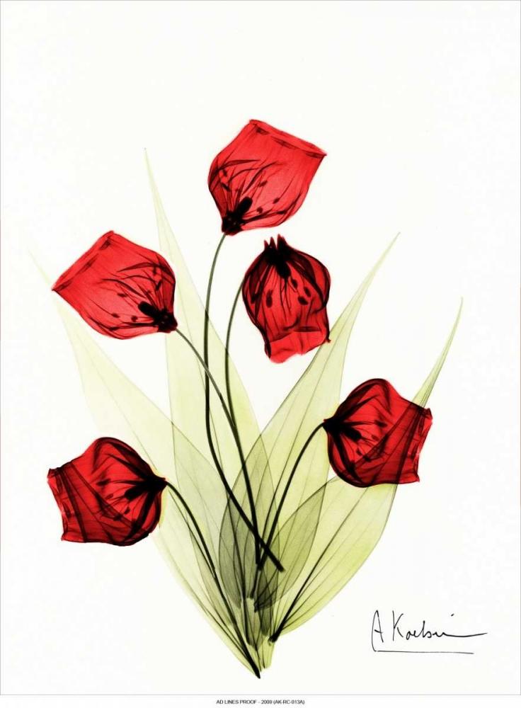 Sandersonia in Red 2 Koetsier, Albert 22170