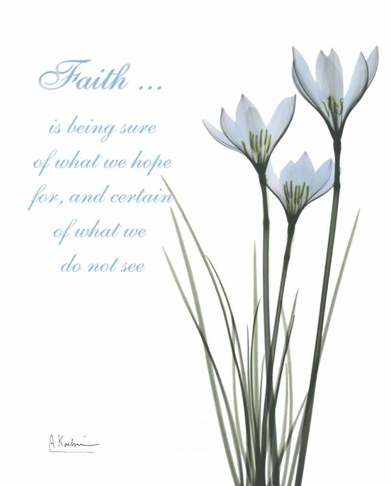 White Rain Lily - Faith Koetsier, Albert 22208
