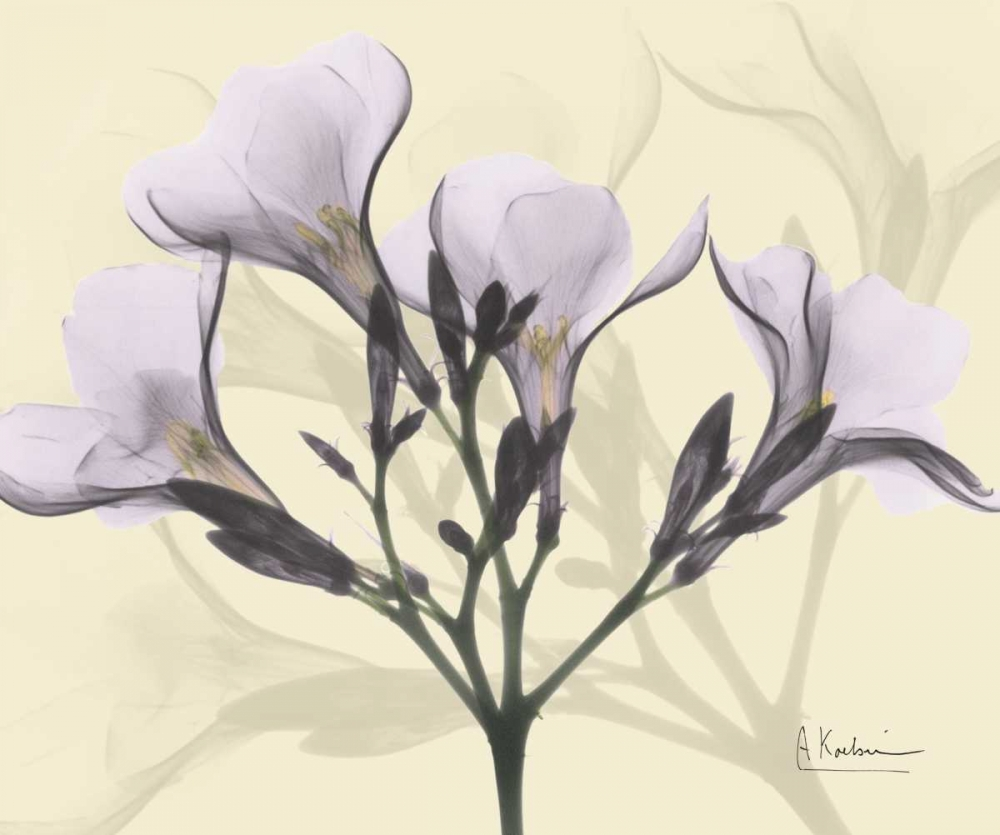 Oleander in Purple on Beige Koetsier, Albert 22245