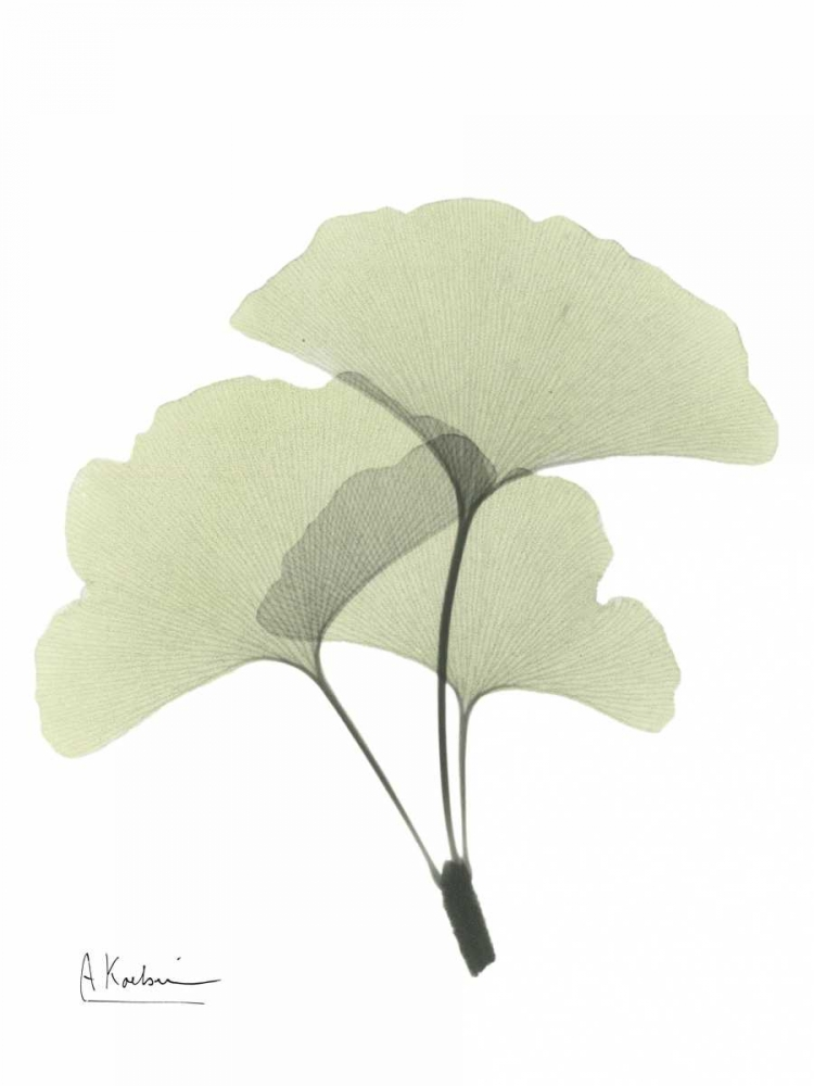 Gingko in Pale Green 2 Koetsier, Albert 22258