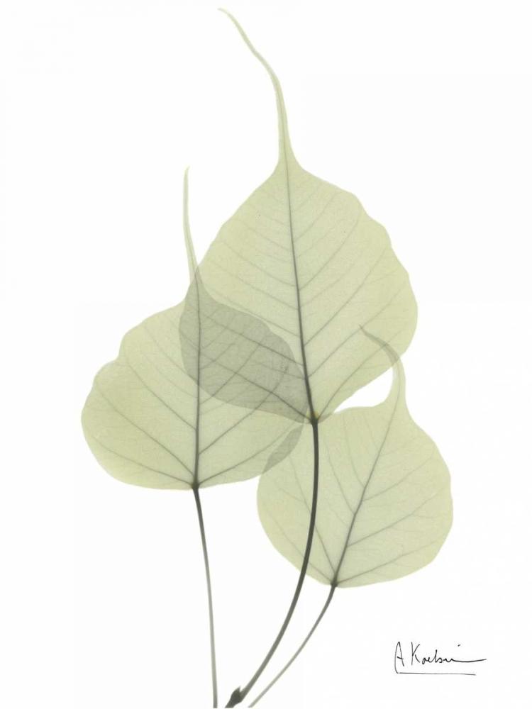 Bo Tree in Pale Green Koetsier, Albert 22262
