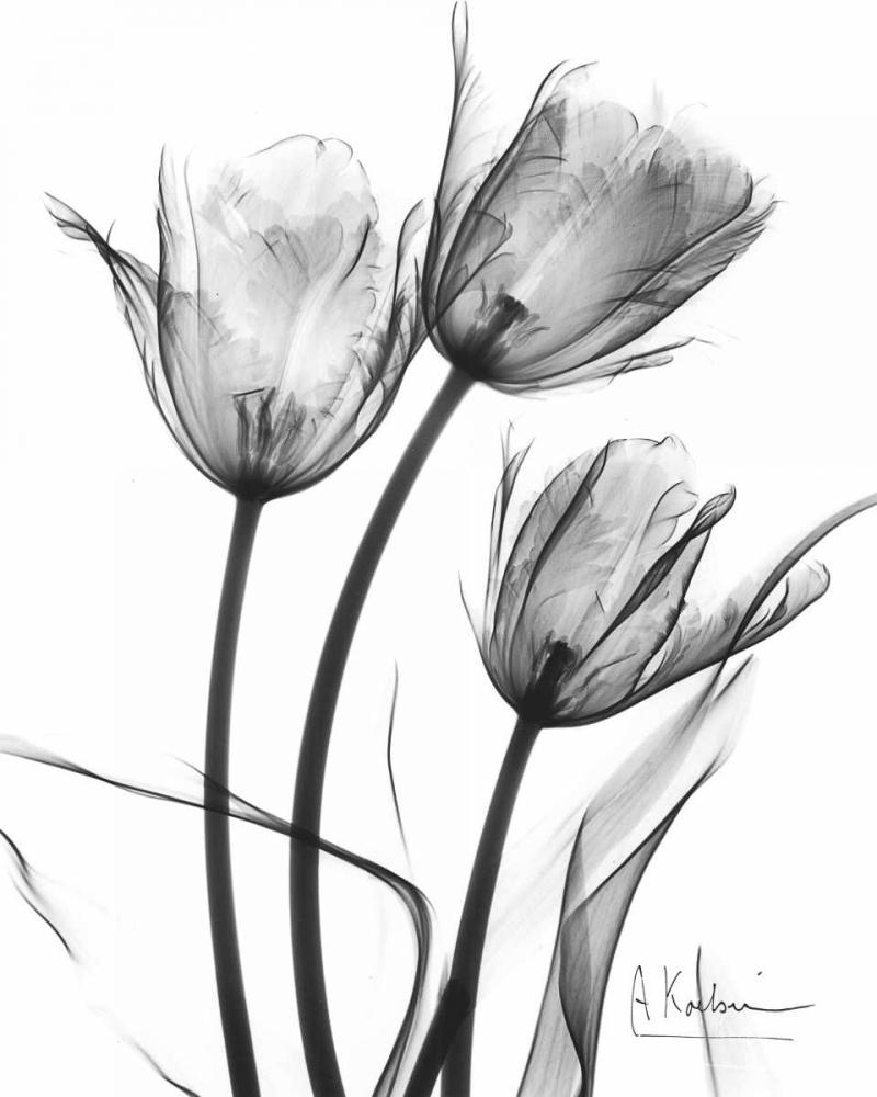 Tulip Arrangement in BandW Koetsier, Albert 22287