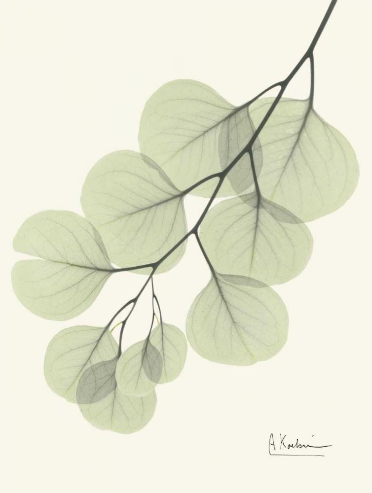 Eucalyptus Leaves in Green Koetsier, Albert 22310
