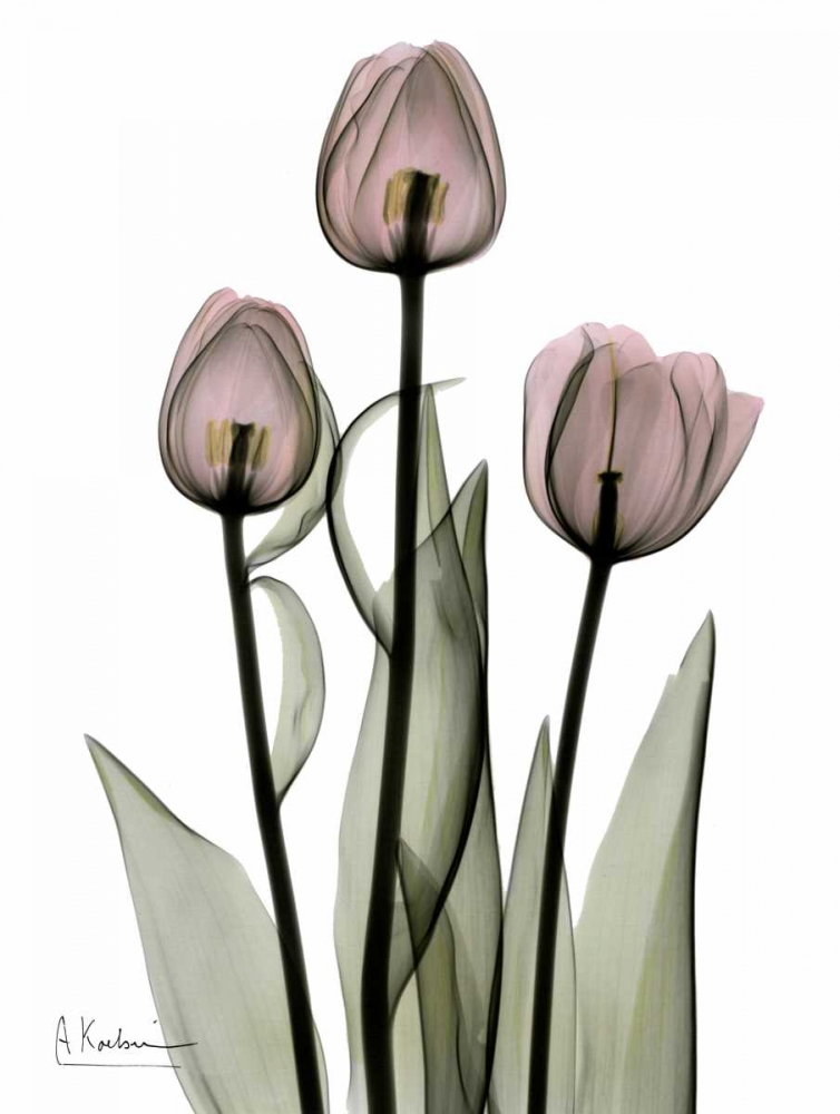 Early Tulips in Pink Koetsier, Albert 22313
