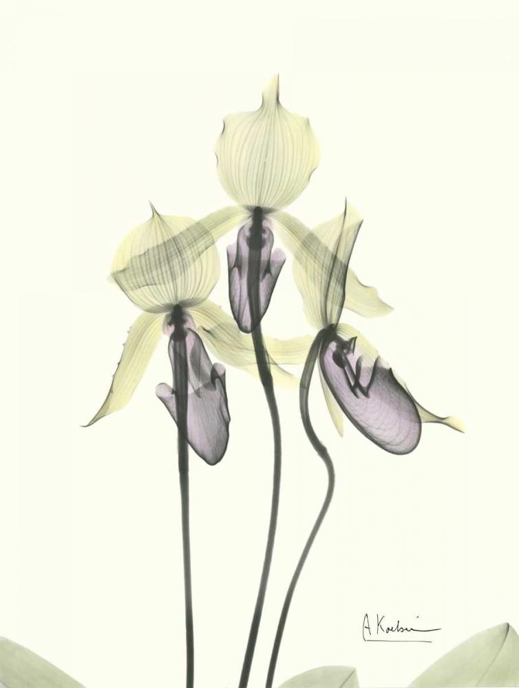 Lovely Orchids Koetsier, Albert 22320