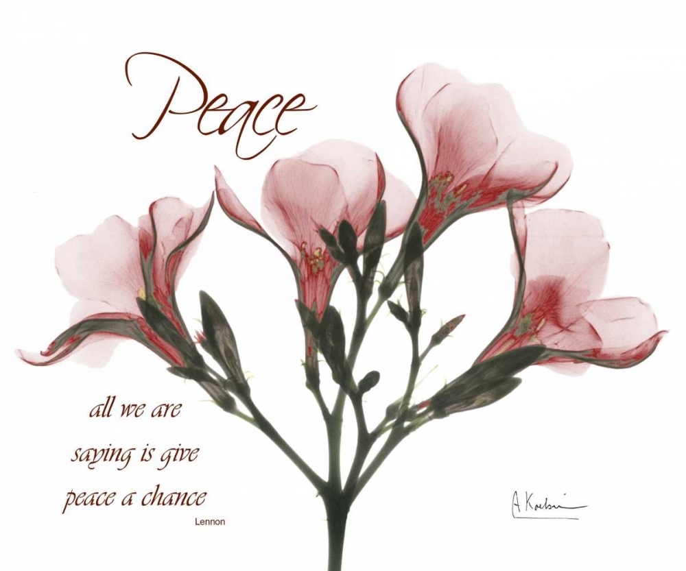 Oleander - Peace Koetsier, Albert 22344
