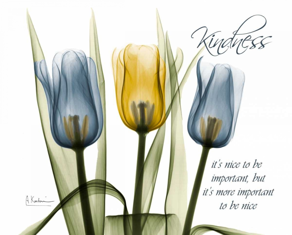 Tulip - Kindness Koetsier, Albert 22345