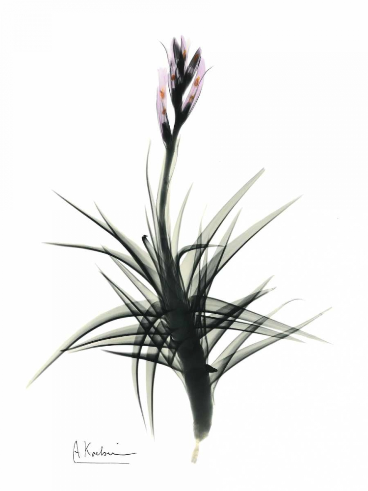 Tillandsia in Bloom Koetsier, Albert 22404