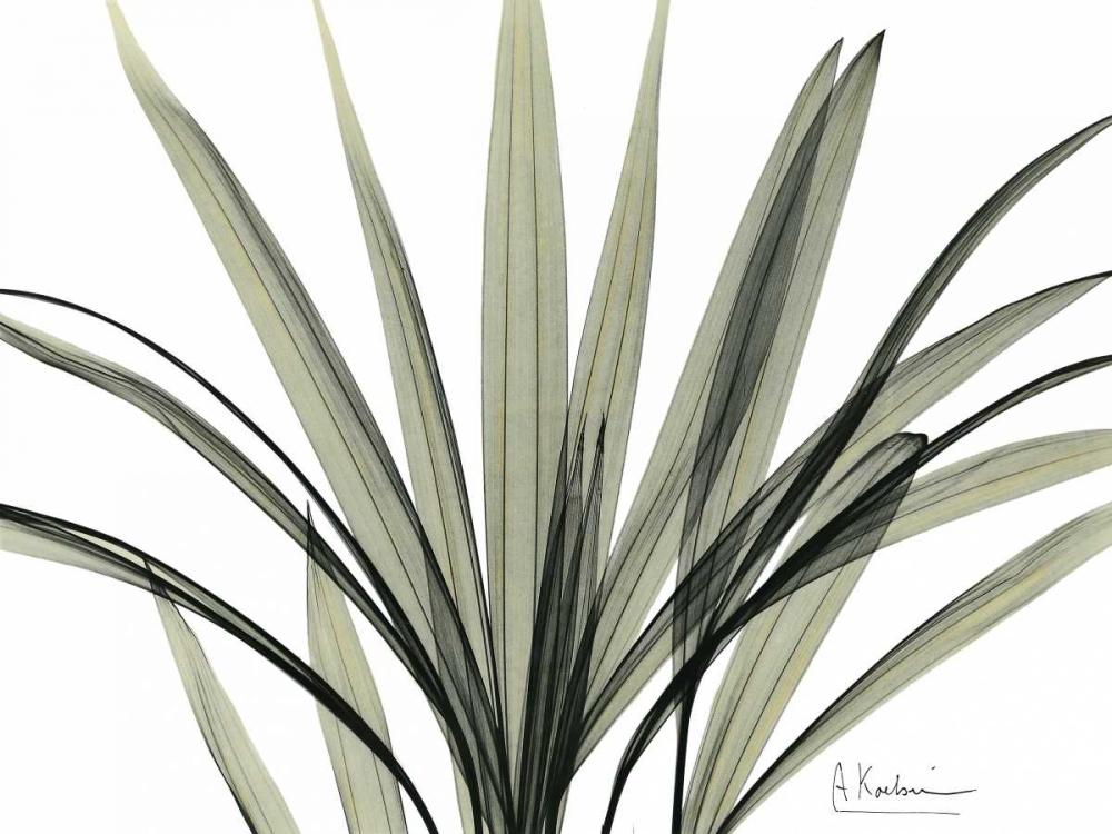 Mini Palm Tree Koetsier, Albert 22415