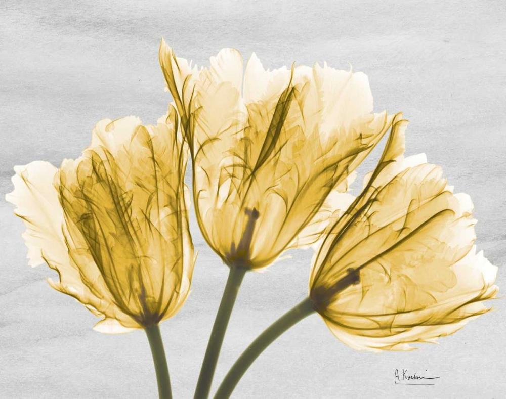 Sunny Trio Tulips Koetsier, Albert 161250