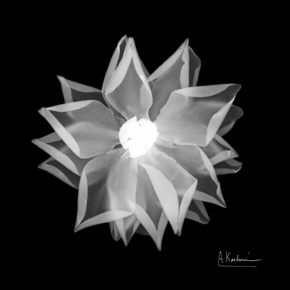 Rose Petals 1 Koetsier, Albert 37242