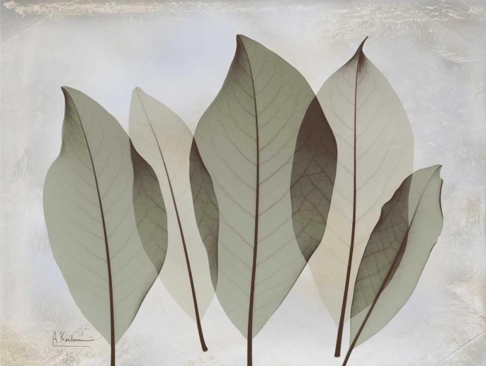 Magnolia Leaf Koetsier, Albert 37262