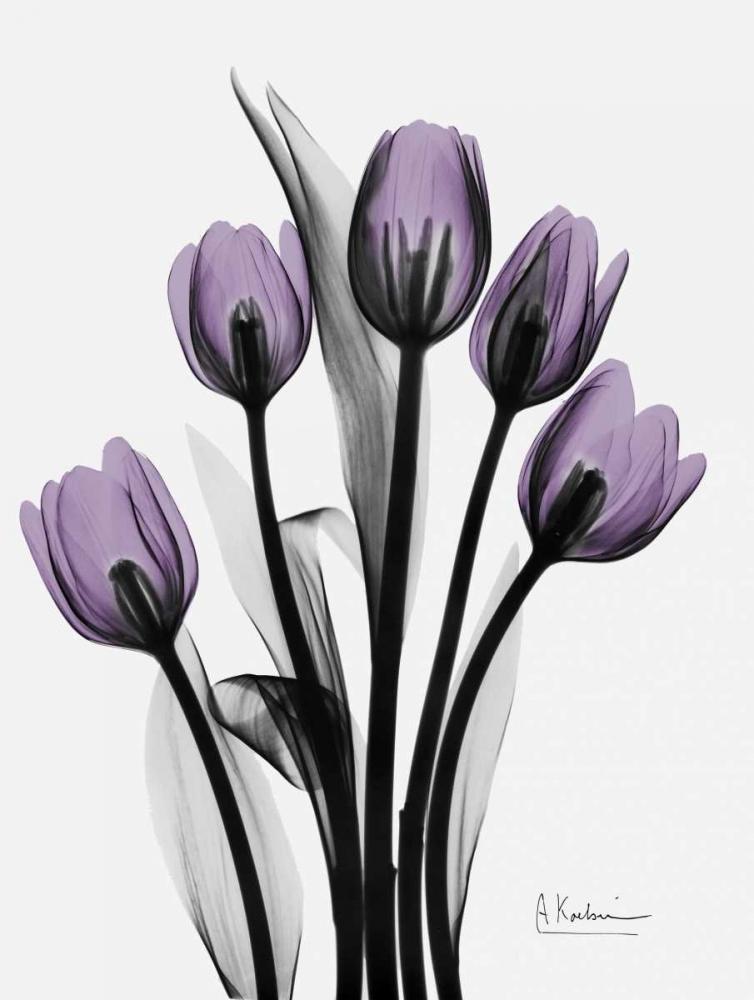 Five Tulips in Purple Koetsier, Albert 161261