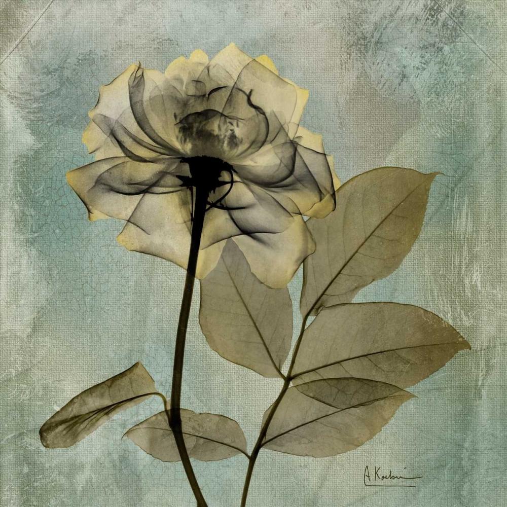 Rose Koetsier, Albert 21724