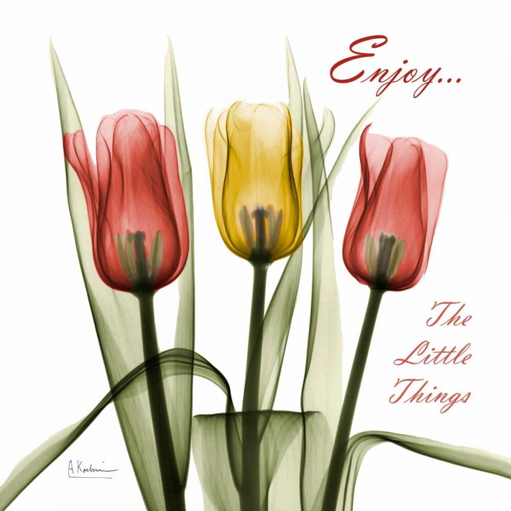 Tulips Enjoy The Little Things Koetsier, Albert 106236
