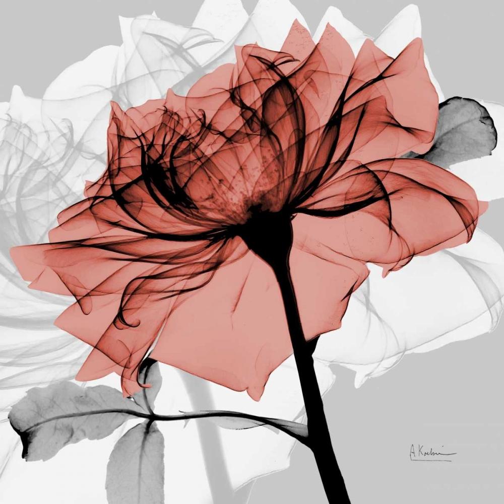 Rose on Gray 2 Koetsier, Albert 21733