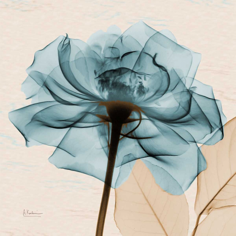 Teal Rose Koetsier, Albert 21734