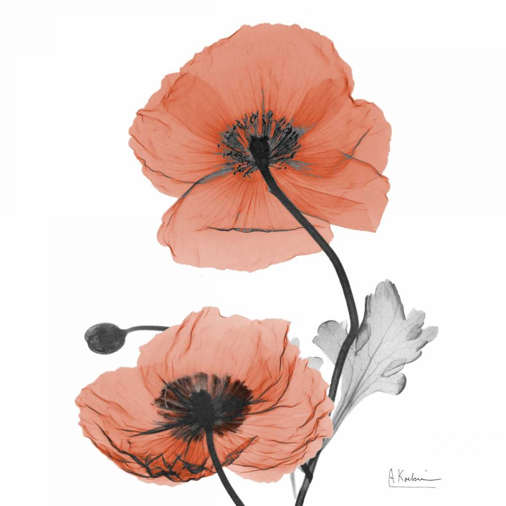 Soft Poppy B16 Koetsier, Albert 137854