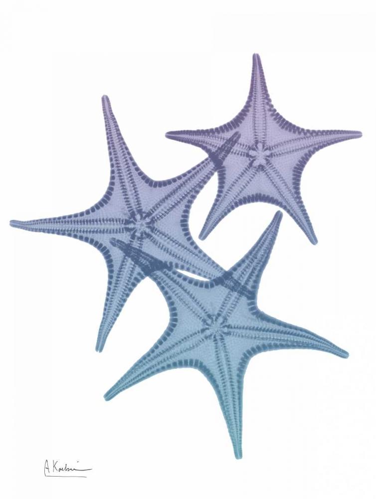 Lavender Splashed Starfish 2 Koetsier, Albert 161269