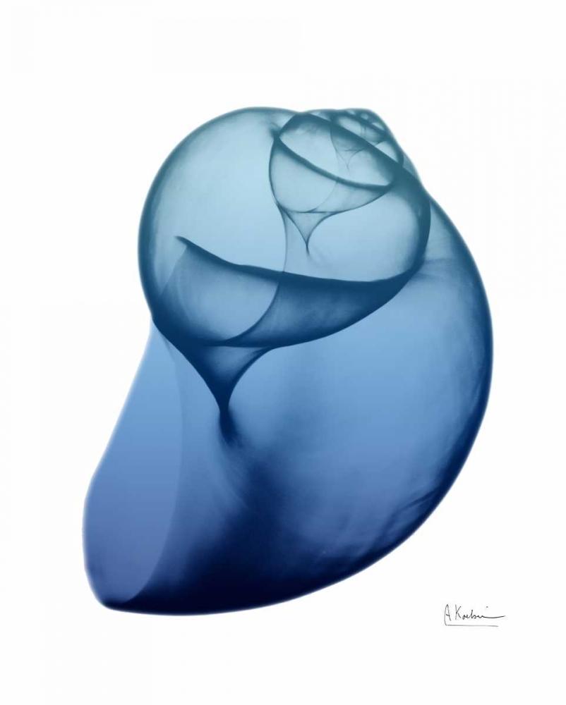 Scenic Water Snail 1 Koetsier, Albert 106274