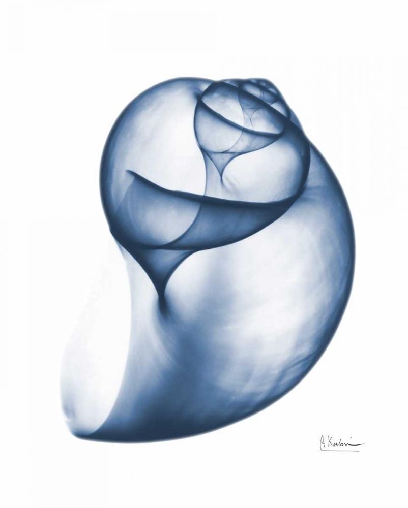 Indigo Water Snail Koetsier, Albert 86076