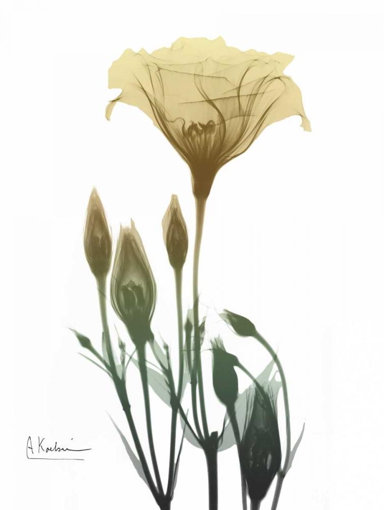 Ocre Bloom 2 Koetsier, Albert 161281