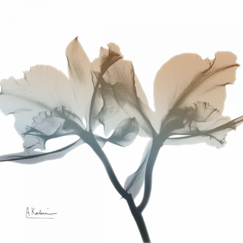 Earthy Orchid Koetsier, Albert 86096
