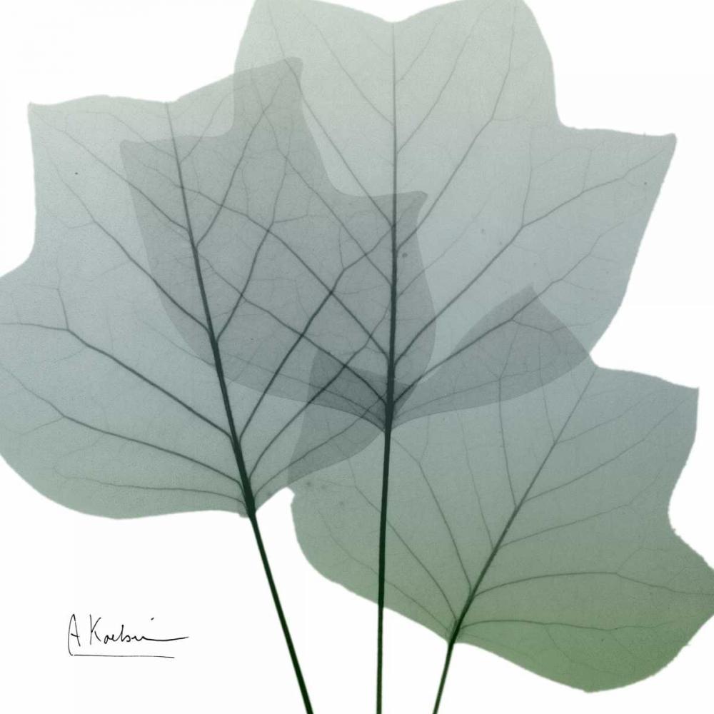 Rainy Tulip Tree Koetsier, Albert 86100