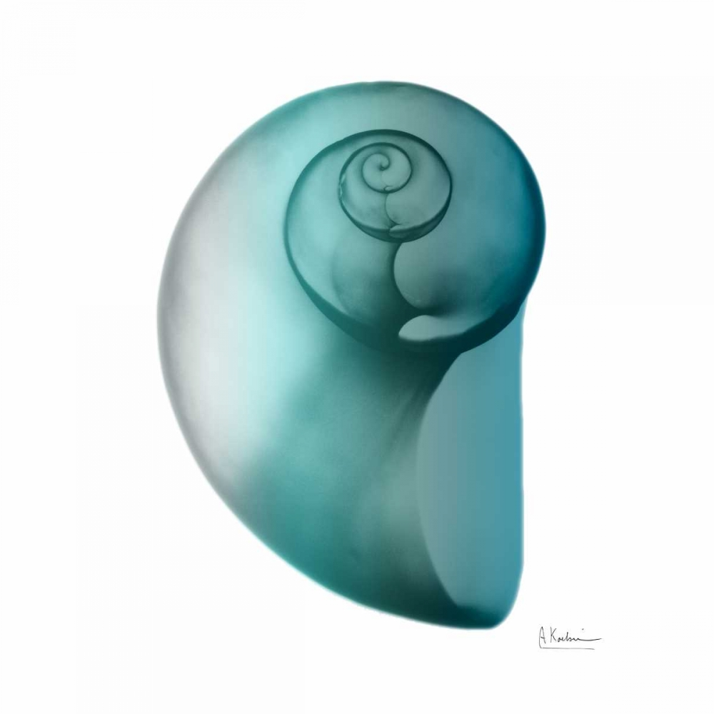 Teal Water Snail 2 Koetsier, Albert 106296