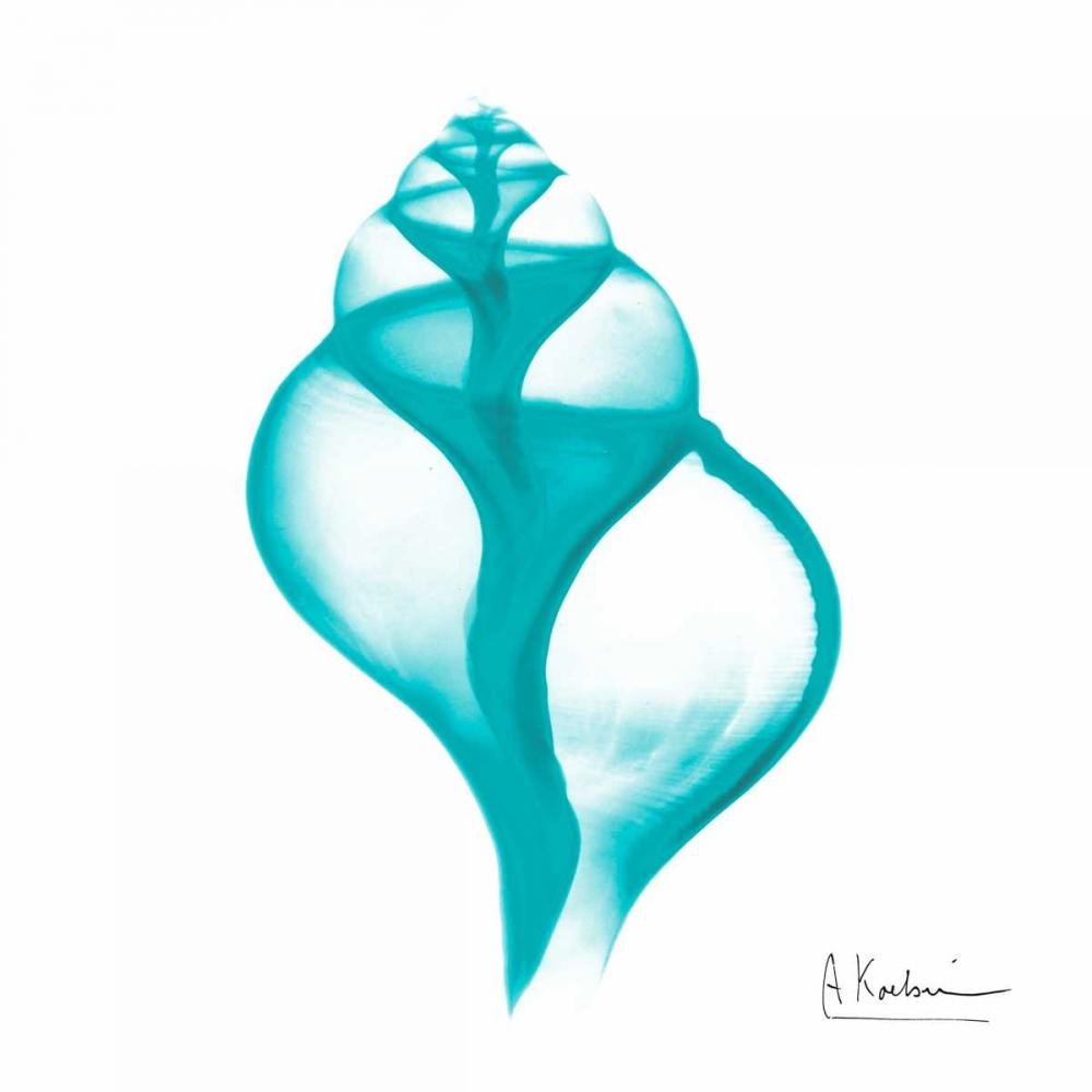 Turquoise Tulip Shell Koetsier, Albert 137879