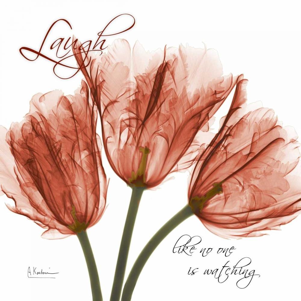 Royal Red Tulip - Laugh Koetsier, Albert 22440