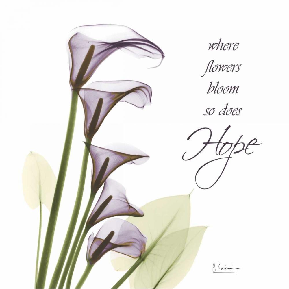 Swaying Callas - Hope Koetsier, Albert 22461