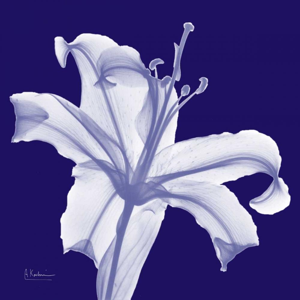 Lily White on Purple Koetsier, Albert 22495