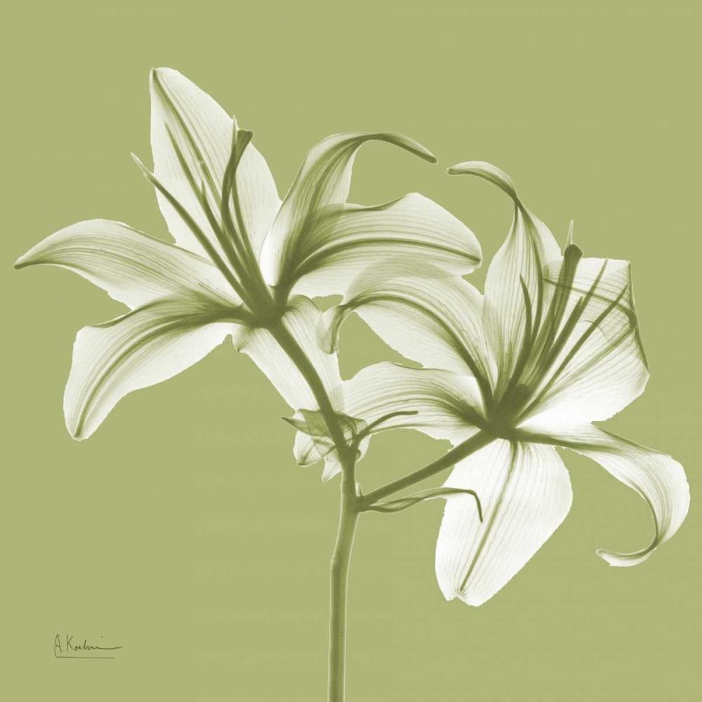 Twin Lilies on Pale Green Koetsier, Albert 22499