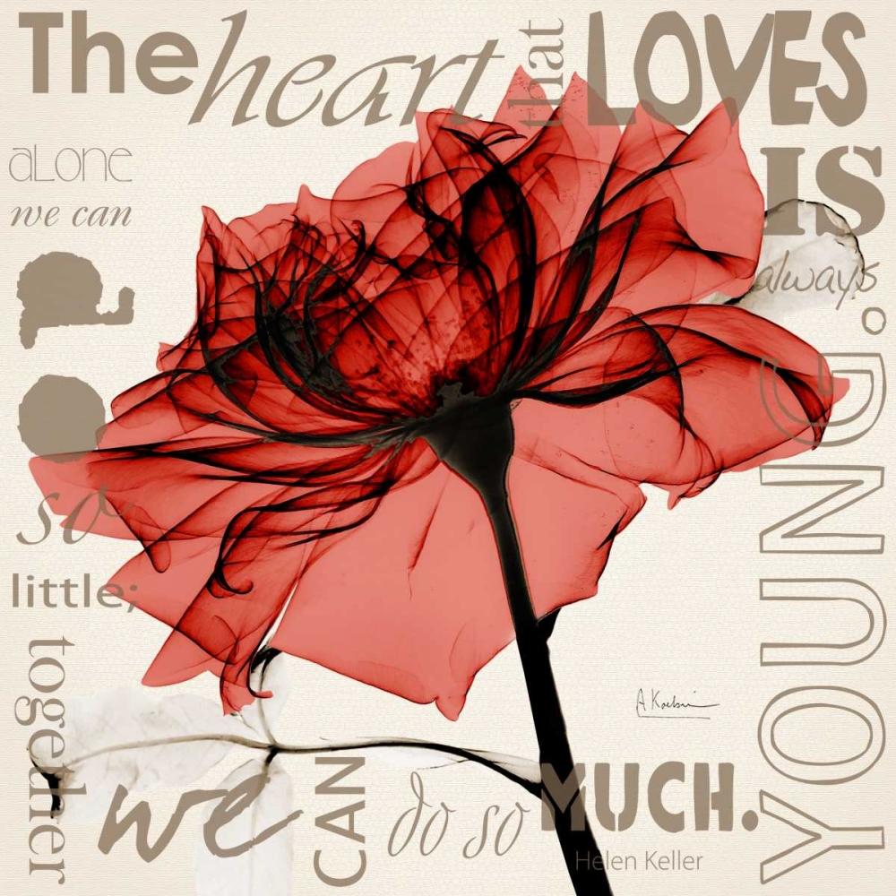 Red Rose Love Koetsier, Albert 22552