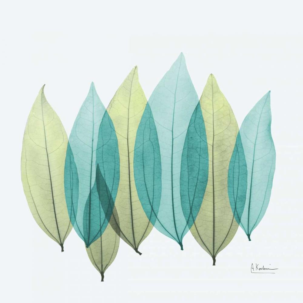 Coculus Leaf L348 Koetsier, Albert 22596