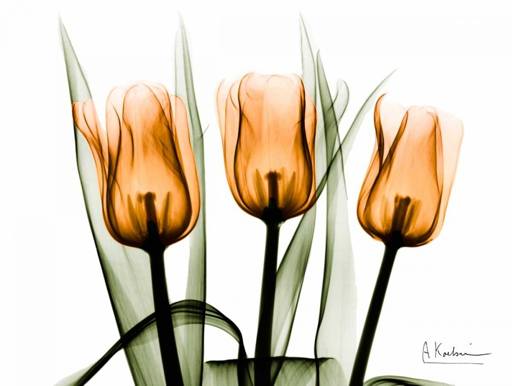 Tulips Orange Koetsier, Albert 22641