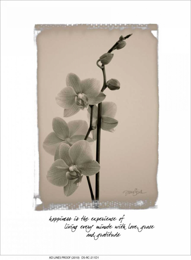 Orchid Stimson, Diane 75028
