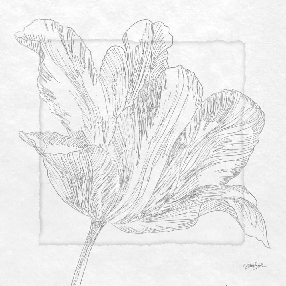 Tulipa 2 Stimson, Diane 75519