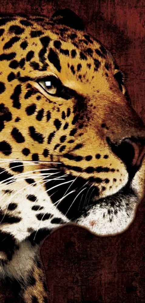 leopard Grey, Jace 25716