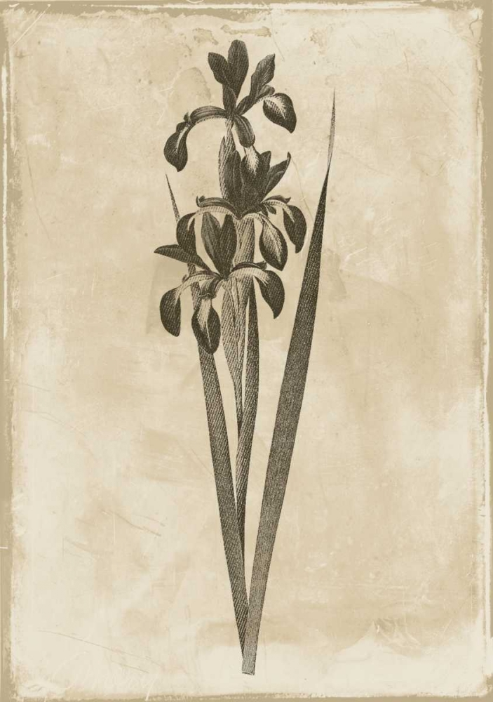 Floral Earthtone Two Grey, Jace 86457