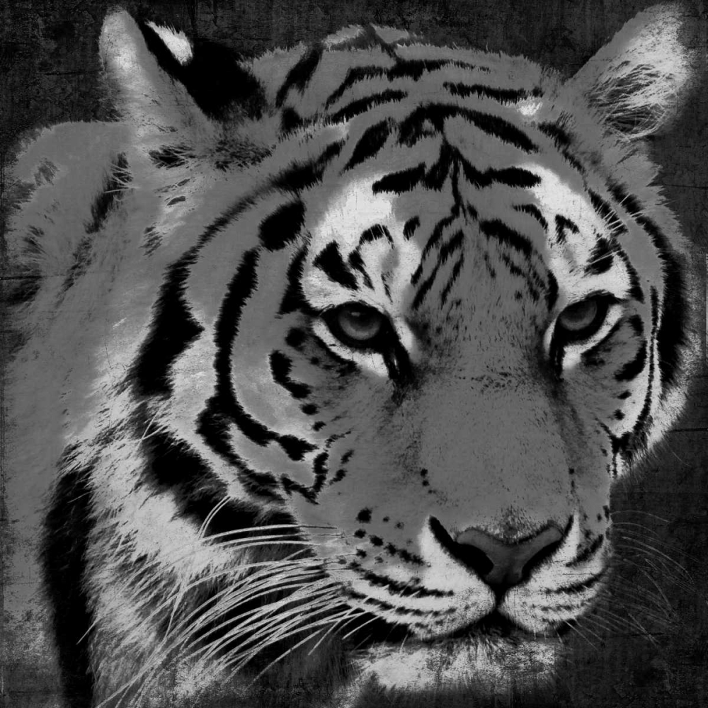 Tiger Black And White Grey, Jace 86573