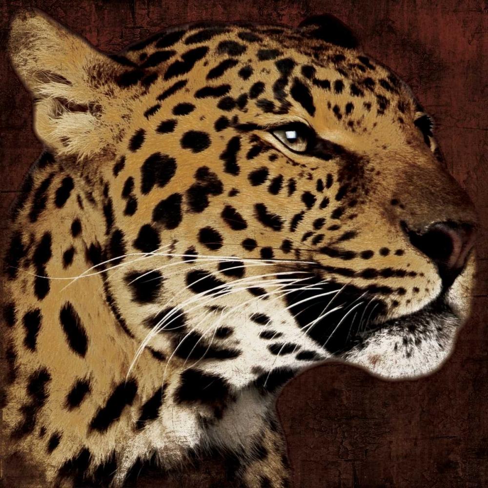 Leopard Grey, Jace 27125