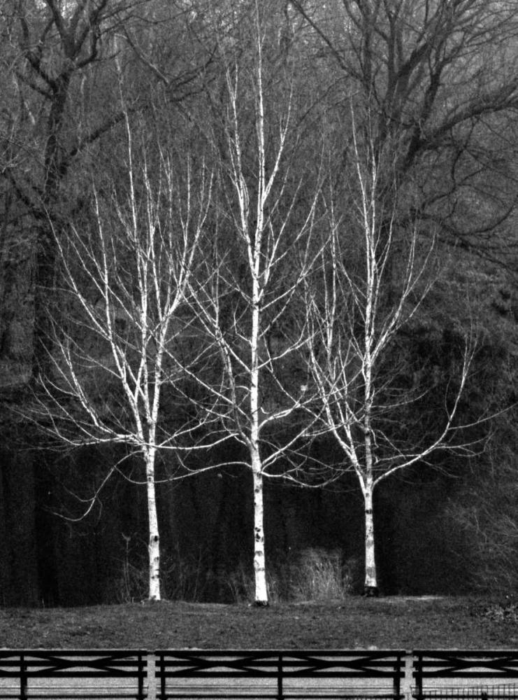 Central Park Three Amigos Fall Grey, Jace 86762